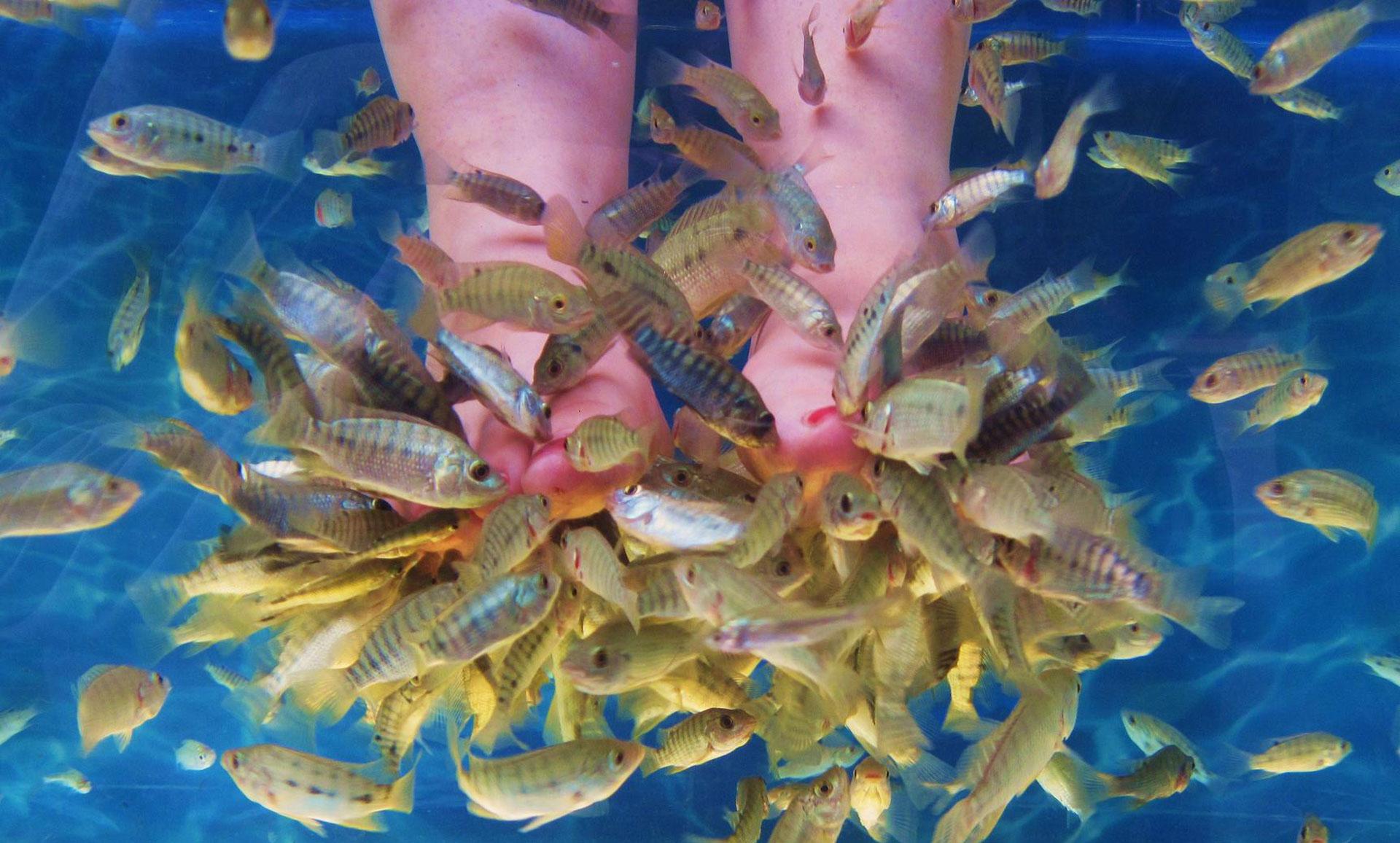 Fish spa acquaplus waterpark hersonissos crete for Fish table game tips